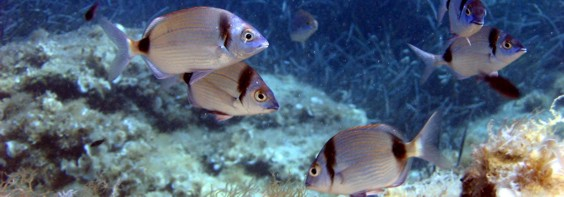 riba u moru besplatno druženje