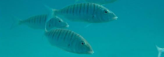 Dobiti više upoznavanja s ribama